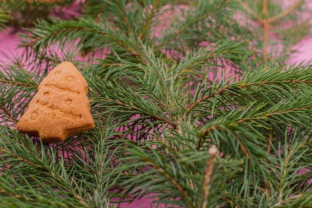 Close up rami di abete e biscotto di pan di zenzero.