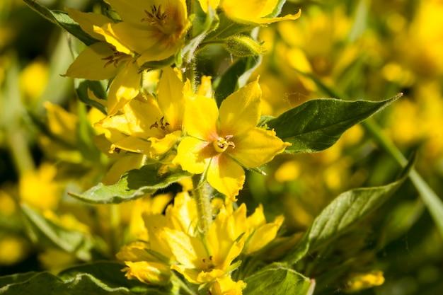 Primo piano sul fiore di colore giallo Foto Premium