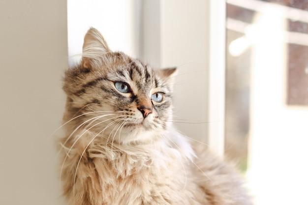 Primo piano di un gatto birichino con grandi occhi azzurri seduto alla finestra