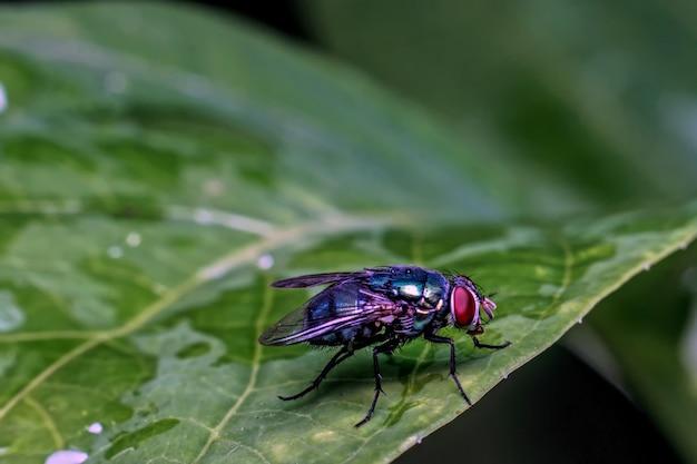 Primo piano della mosca su una foglia
