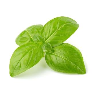 Chiuda su delle foglie verdi fresche dell'erba del basilico isolate su fondo bianco. dolce genovese bas