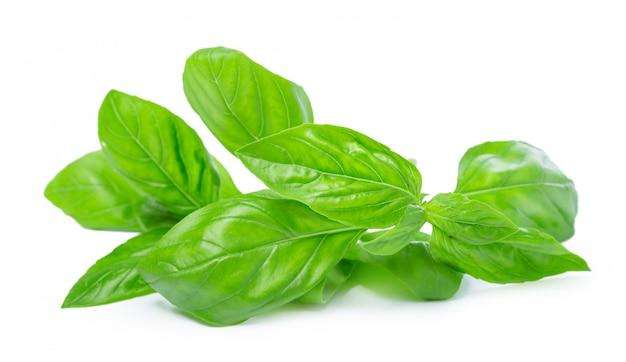 Chiuda su delle foglie verdi fresche dell'erba del basilico isolate su fondo bianco