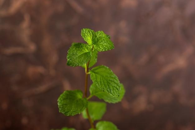 Primo piano di foglie di menta fresca su una pietra sfondo texture