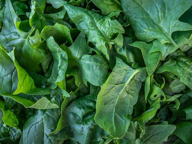 Close-up di foglie di spinaci freschi