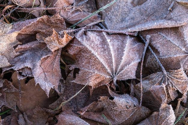 Primo piano di foglia di acero brina congelata su erba gelida.