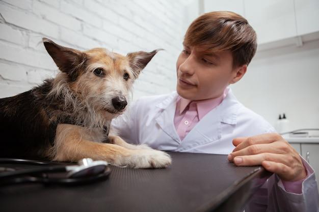 Primo piano di un cucciolo di razza mista divertente cercando paura sdraiato sul lettino presso la clinica veterinaria