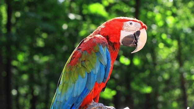 Avvicinamento. ara pappagallo divertente su sfondo sfocato.