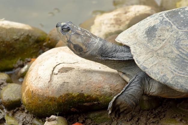 Primo piano sul profilo della tartaruga delle galapagos