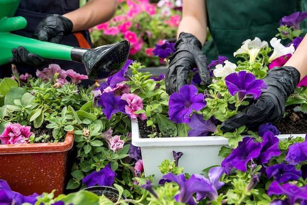 Primo piano della mano del giardiniere che indossa guanti che raccolgono fiori in una serra industriale. botanica