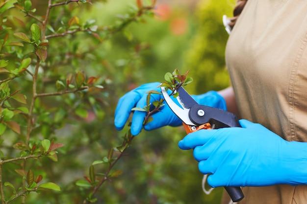 Primo piano delle mani di una ragazza in guanti da giardinaggio che potano i rami delle piante.