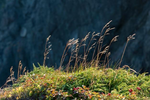 Close-up di erba, skerwink trail, bonavista peninsula, terranova e labrador, canada