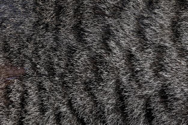 Chiuda sulla pelle di gatto grigia per il gatto e il fondo