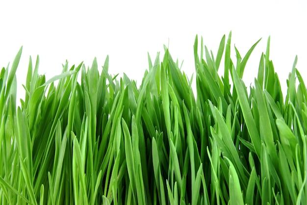 Erba verde del primo piano isolata su bianco