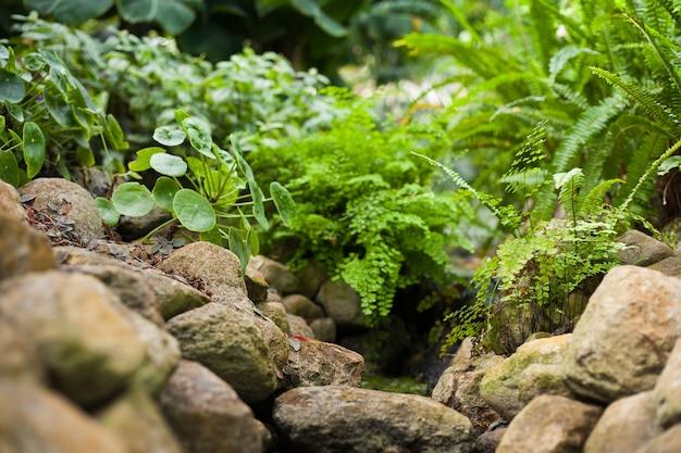 Primo piano di un'erba verde e foglie in un piccolo fiume di acqua limpida dietro le rocce