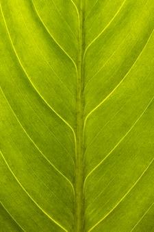 Primo piano della superficie della foglia verde