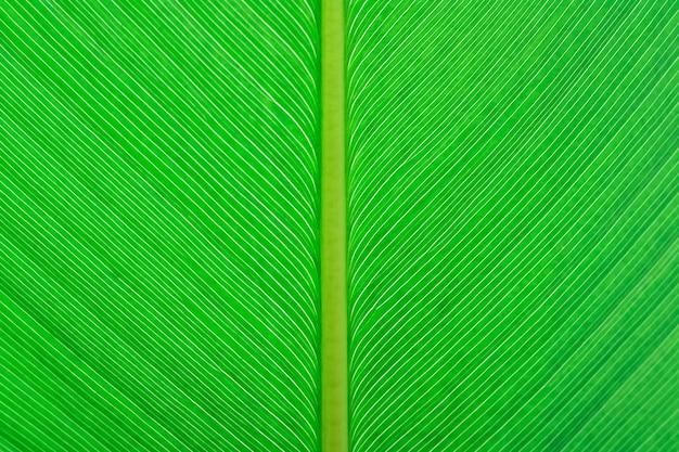 Primo piano sfondo texture foglia verde