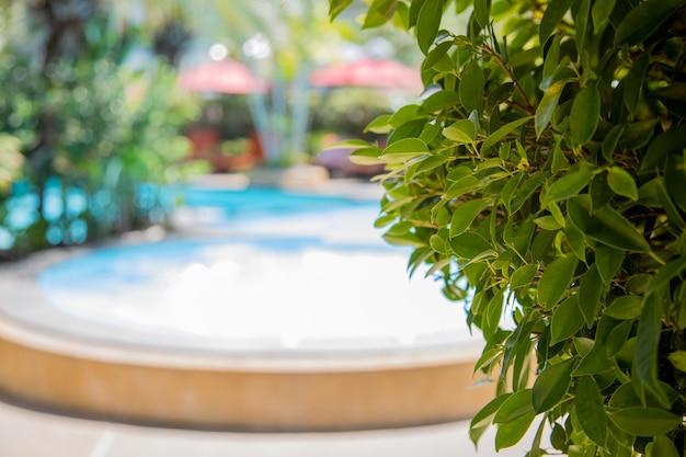 Primo piano di foglie verdi sullo sfondo della piscina in una giornata di sole in sfocatura.