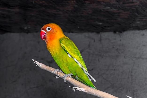 Primo piano dell'uccello verde dell'amore
