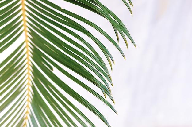 Foglia di palma verde del primo piano su fondo di marmo bianco vago.