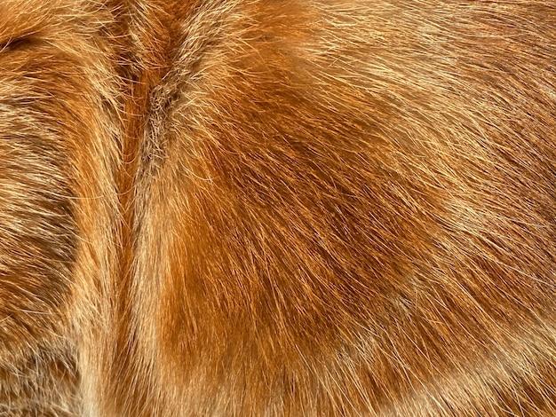 Primo piano su un gatto peloso dello zenzero, pelliccia rossa, bella consistenza naturale, primo piano