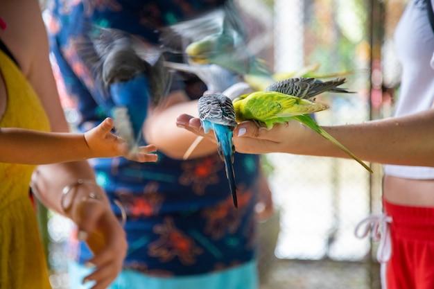 Primo piano della mano di un bambino e di un adulto che alimentano i pappagalli dalle mani
