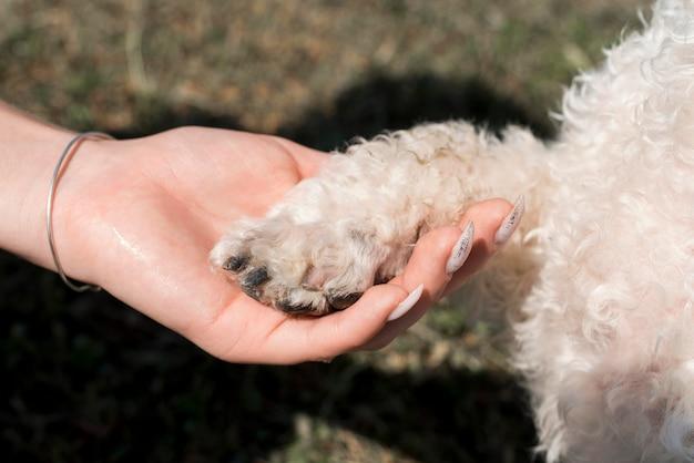 Primo piano della mano che tiene la zampa del cane