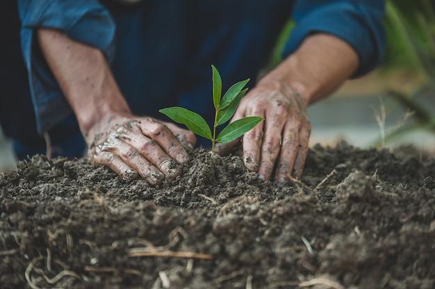 Primo piano mano piantare la crescita degli alberi semina