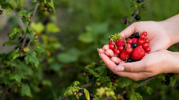 Mani del primo piano che tengono frutti sani