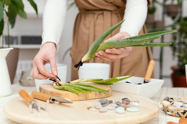 Mani del primo piano che tengono pianta