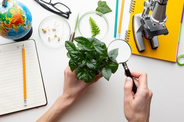Mani del primo piano che tengono pianta in vaso