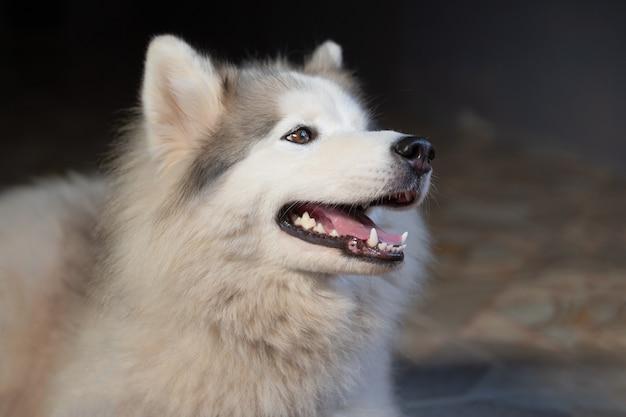 Primo piano felice cane bianco che dorme