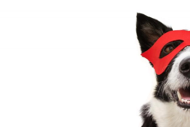 Costume da super eroe per cani in primo piano per carnevale o festa di halloween che indossa una maschera rossa.