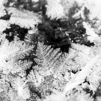 Primo piano dei cristalli di ghiaccio su una foglia in inverno, parco nazionale di banff, alberta, canada