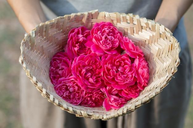 Chiuda sull'immagine delle rose rosa