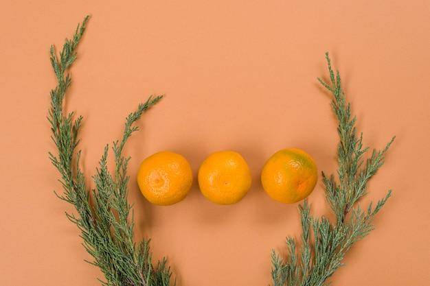 Primo piano di rami di ginepro e mandarini
