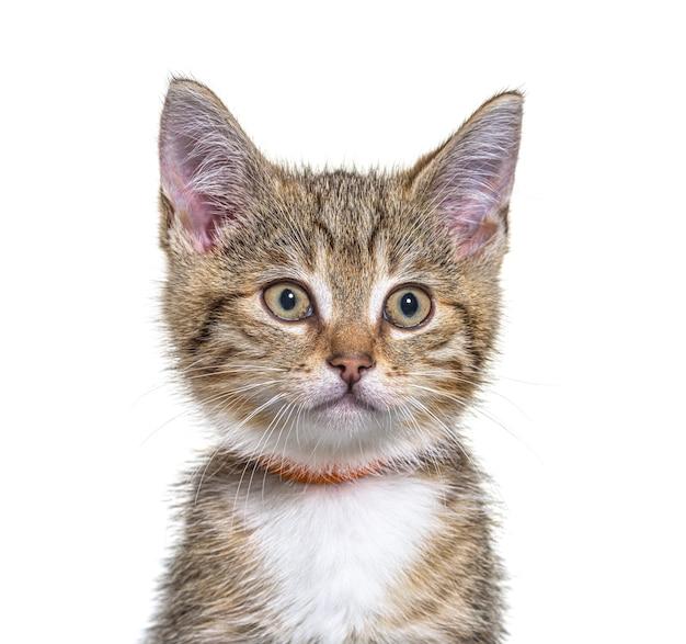 Primo piano di un gatto dell'incrocio del gattino isolato su bianco
