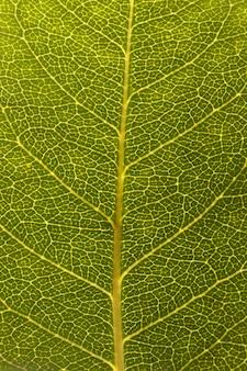 Primo piano delle vene delle foglie