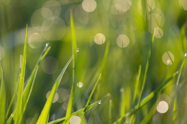 Chiuda sulla macro immagine astratta accesa dalle lame di erba verde chiaro pulite fresche luminose luminose del sole che crescono sul bokeh vago il giorno soleggiato dell'estate o della primavera. bellezza del concetto di ambiente naturale.
