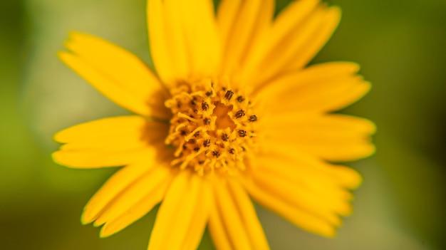 Chiuda sulla macro del fiore nel parco di tempo di mattina all'aperto