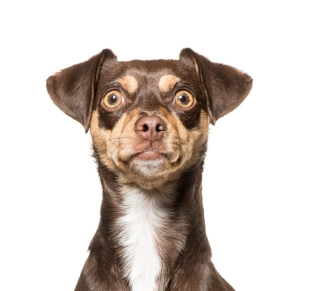 Primo piano di un cane di razza mista