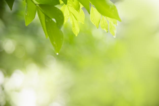 Chiuda su della foglia di verde della vista della natura con goccia di pioggia sul fondo vago della pianta nell'ambito della luce solare con bokeh