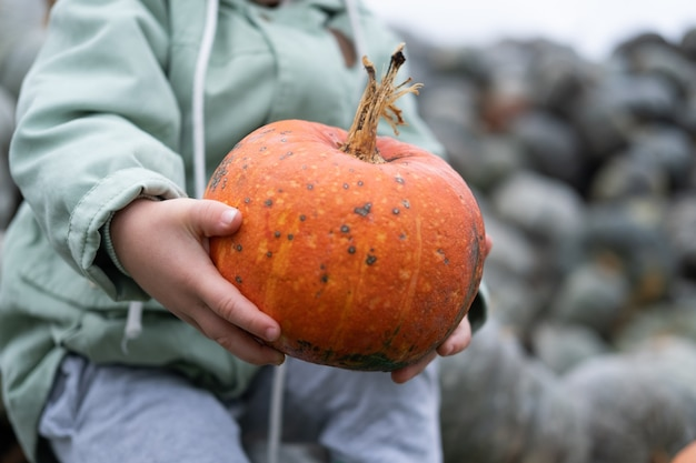 Chiuda in su della piccola zucca organica arancione nelle mani del bambino. stagione autunnale, raccolto di zucca.