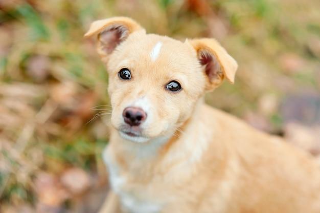 Close up ritratto all'aperto di senzatetto abbandonato cucciolo di cane con gli occhi tristi.