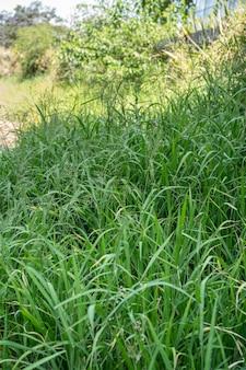 Primo piano di erba invasa nel parco