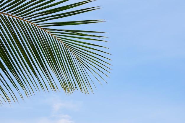 Chiudere le foglie di palma sopra il cielo azzurro chiaro con spazio per le copie, vista ad angolo basso