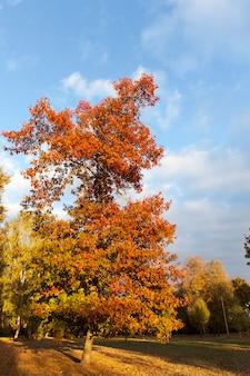 Primo piano sul parco con alberi