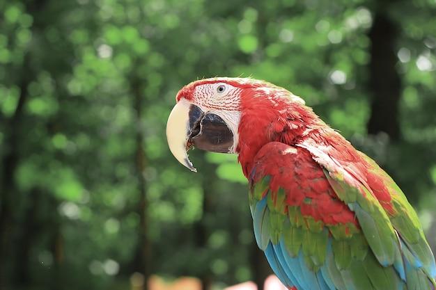 Avvicinamento. pappagallo ara seduto su un ramo.