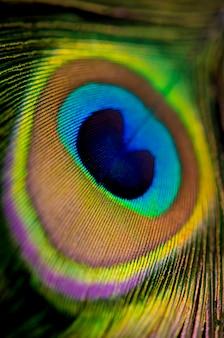 Primo piano di una piuma di pavone che riempie il telaio, superficie animale brillante