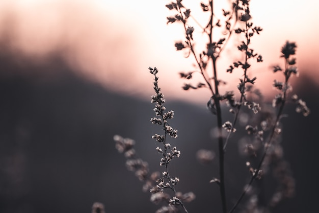 Foto ravvicinata di picchi selvatici retroilluminati alla luce del tramonto