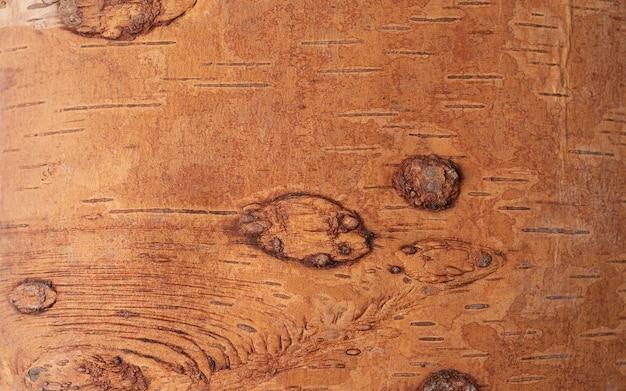Primo piano foto della corteccia di un albero di betulla
